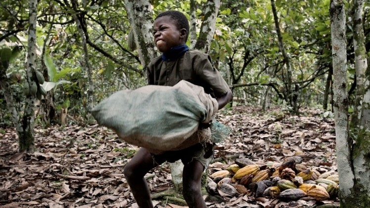 child labor in africa /confectionery news